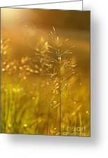 Golden Glow Greeting Card by Sandra Cunningham