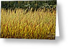 Golden Grasses Greeting Card by Meirion Matthias