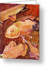 Golden Koi Greeting Card by Pat Saunders-White