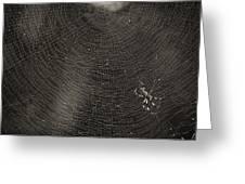 Golden Silk Spider Greeting Card by Patrick M Lynch