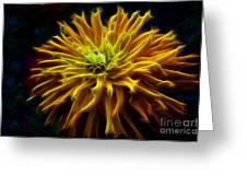 Golden Zinnia Glow Greeting Card by Darleen Stry