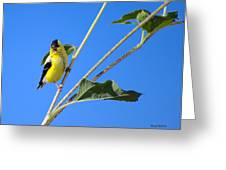 Goldfinch On Sunflowers Greeting Card by Stephen  Johnson