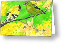 Goldfinches And Forsythia Greeting Card by Forrest C Greenslade PhD