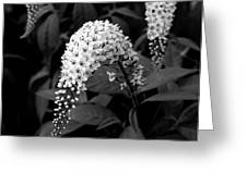 Gooseneck Loosestrife Greeting Card by Michael Friedman
