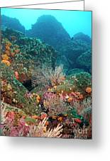 Gorgonian Fans And Cup Coral On Rocky Seabed Greeting Card by Sami Sarkis