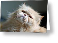 Gracie Greeting Card by Lisa  Phillips