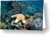 Granulated Seastar Greeting Card by Georgette Douwma