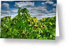 Grape Vines Up Close Greeting Card by Steven Ainsworth