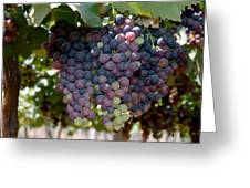 Grapes Bunch Greeting Card by Johnson Moya
