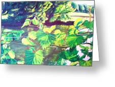 Grapevines Toledo Botanical Gardens Greeting Card by Samuel McMullen
