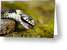 Grass Snake Feigning Death Greeting Card by Andy Harmer