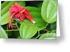 Grasshopper And Hibiscus Greeting Card by Jessica Rose