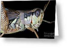 Grasshopper With Parasitic Mite Greeting Card by Ted Kinsman