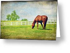 Grazing Greeting Card by Darren Fisher