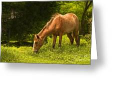 Grazing Horse Greeting Card by Charuhas Images