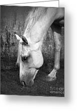 Grazing In Black And White Greeting Card by Betty LaRue
