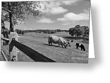 Grazing The Day Away Greeting Card by Catherine Reusch  Daley