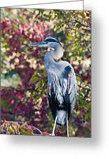 Great Blue Heron Greeting Card by David Martorelli
