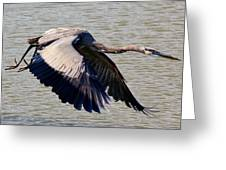 Great Blue Heron Soaring Greeting Card by Paulette Thomas
