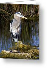 Great Blue Greeting Card by Marty Koch