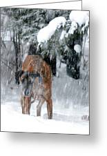 Great Dane Rufus Looking Into A Blizzard Greeting Card by Lila Fisher-Wenzel