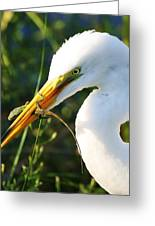 Great White Egret In The Lizard Greeting Card by Paulette Thomas