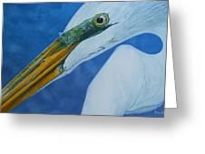 Great White Egret Greeting Card by Jon Ferrentino