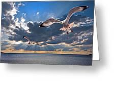 Greek Gulls With Sunbeams Greeting Card by Meirion Matthias