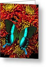 Green Blue Butterfly Greeting Card by Garry Gay