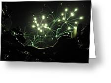 Green Fireworks Over A Soft Tail Greeting Card by Tobey Brinkmann