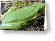 Green Green Greeting Card by William Bryan