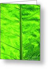 Green Leaf Greeting Card by Sami Sarkis