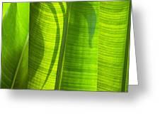 Green Leaf Greeting Card by Setsiri Silapasuwanchai