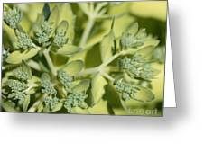 Green On Green Greeting Card by James E Weaver