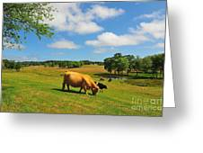 Green Pasture Greeting Card by Catherine Reusch  Daley