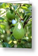 Green Pear Greeting Card by Carol Groenen