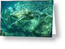 Green Sea Turtle Hawaii Greeting Card by Bob Christopher