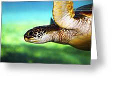 Green Sea Turtle Greeting Card by Marilyn Hunt
