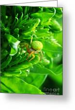 Green Spider 2.0 Greeting Card by Yhun Suarez