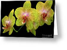 Green Spotted Orchids Greeting Card by Merton Allen