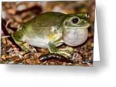 Green Tree Frog Greeting Card by Douglas Barnard