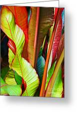 Greenhouse Palms 2 Greeting Card by Stephen Mack