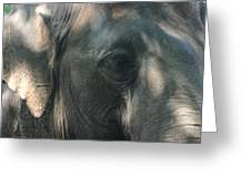 Grey 2 Greeting Card by Stephanie Hopkins