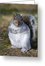 Grey Squirrel Sitting On The Ground Greeting Card by Colin Varndell
