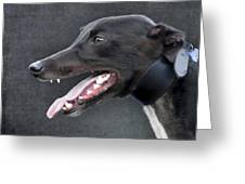 Greyhound Dog Portrait Greeting Card by Ethiriel  Photography