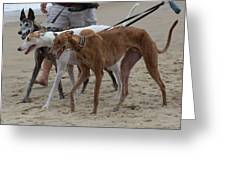 Greyhounds On The Beach Greeting Card by Jim Vansant