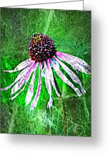 Gritty Coneflower Greeting Card by Marty Koch