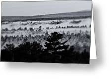 Ground Fog Greeting Card by Susan Capuano