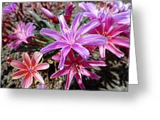 Ground Stars Greeting Card by Robert Meyers-Lussier