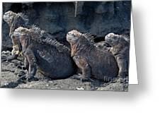 Group Of Marine Iguana Lying On Rock Greeting Card by Sami Sarkis